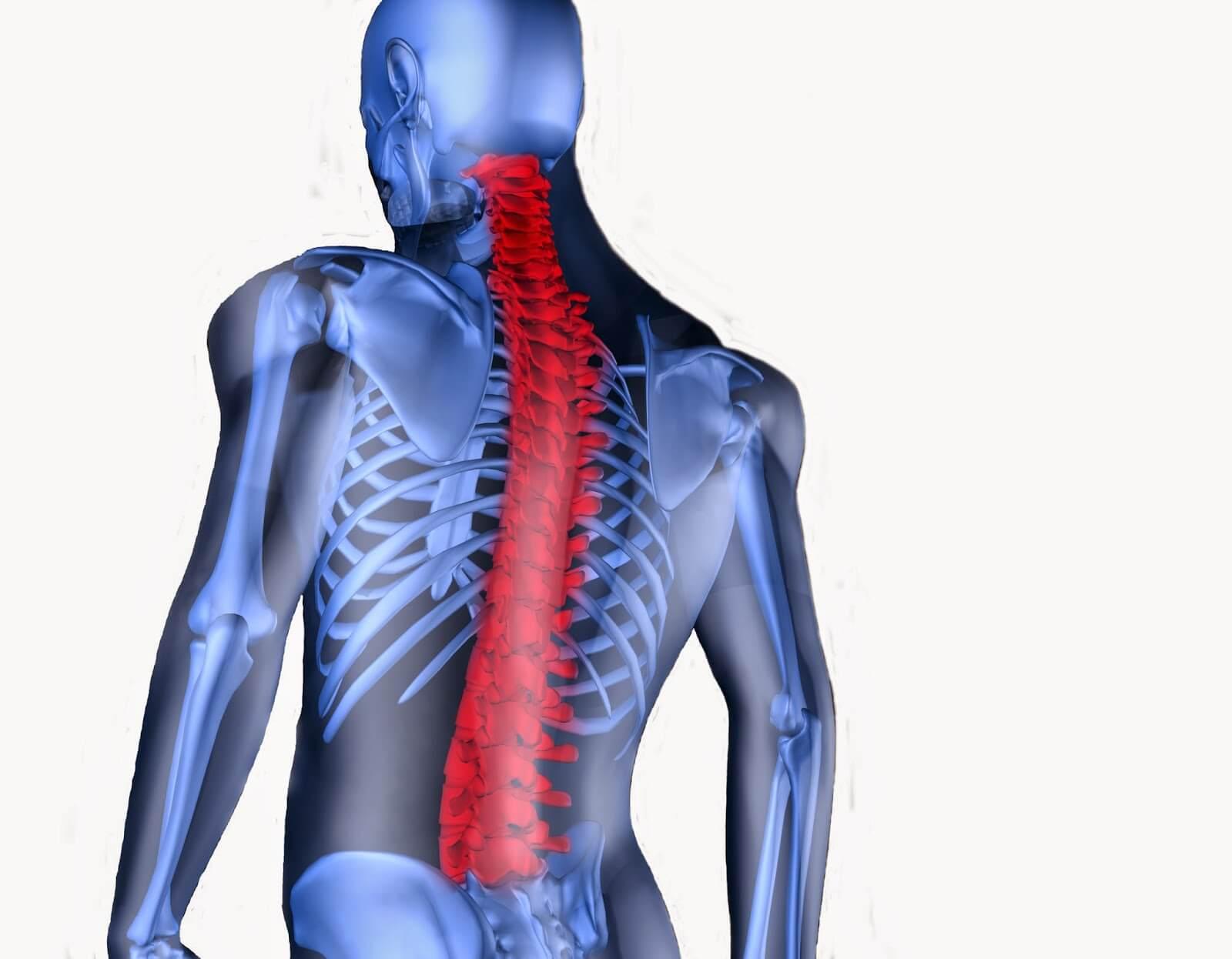 Spine4
